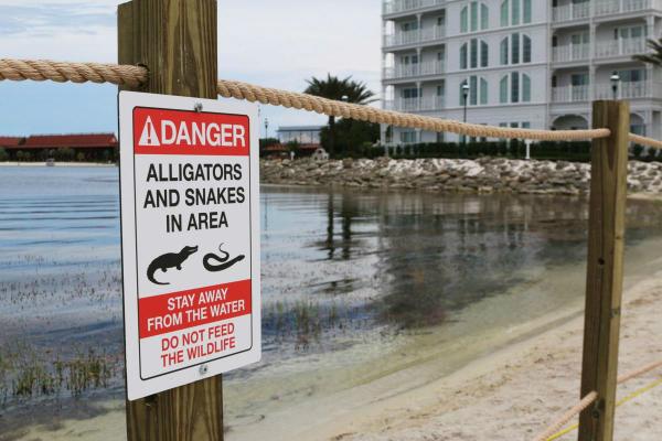 Aligator Warning
